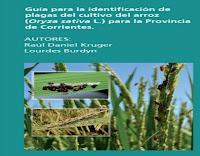 guía-para-la-identificación-de-plagas-del-cultivo-de-arroz