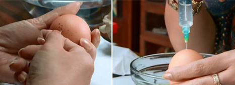 kerajinan tangan dari cangkang kulit telur