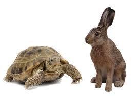 """कछुआ और खरगोश"""" कहानी एक नये अन्दाज़ में,"""