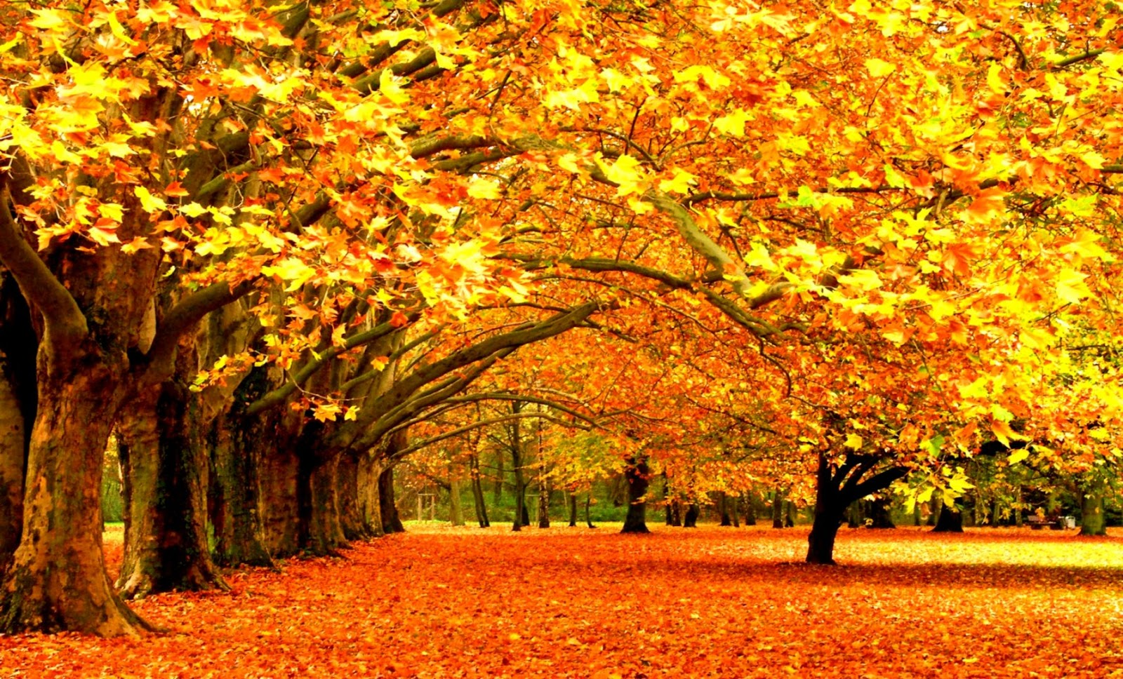 Autumn Wallpaper High Resolution Wallpapers Abstract
