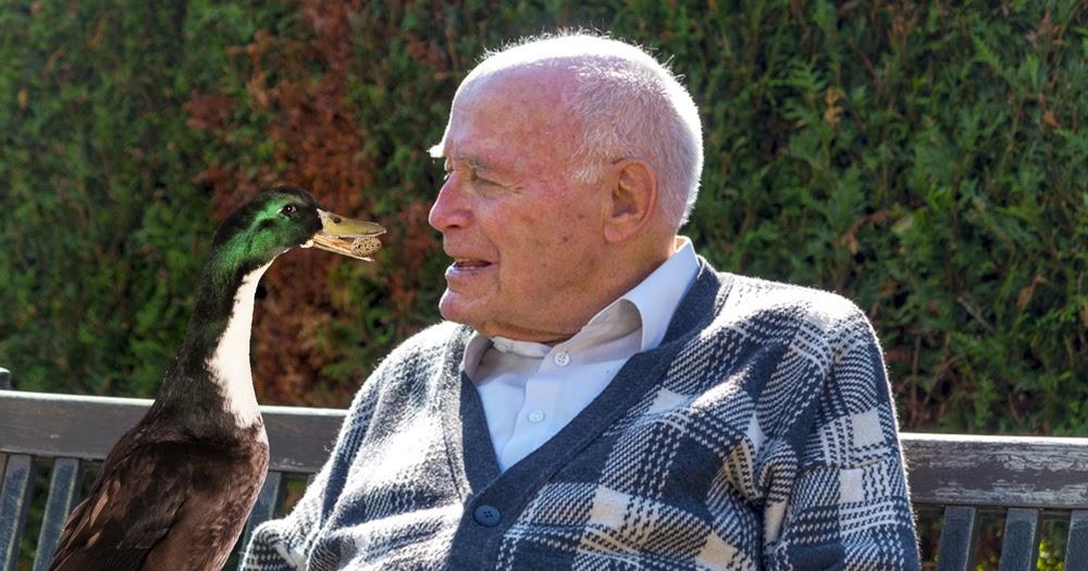 Wachsende-Altersarmut-Immer-mehr-Rentner-werden-von-Enten-gef-ttert