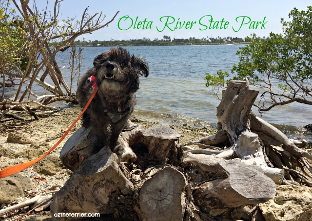 Oz on Biscayne Bay, Oleta River State Park, Miami, Florida