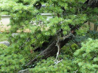 長岳寺の旧地蔵院庭園 松