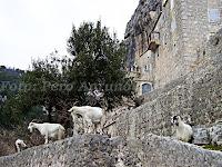 koze, pustinja Blaca otok Brač slike