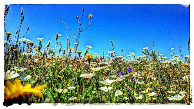 Naturaleza. La Dehesa de Abajo, Doñana