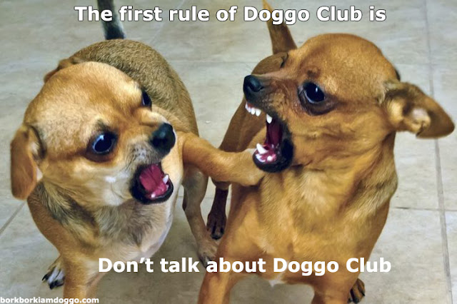 The first rule of doggo club is don't talk about doggo club