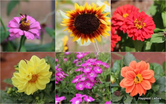 Dasara Flower Show 2016 beautiful flowers