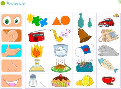 Blogs de ana bastida 1 y 2 los 5 sentidos for Mural de los 5 sentidos