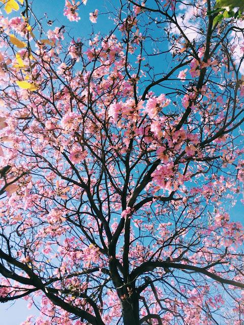 46 dni do kalendarzowej wiosny. Poczucie wewnętrznej siły, energii, motywacji.