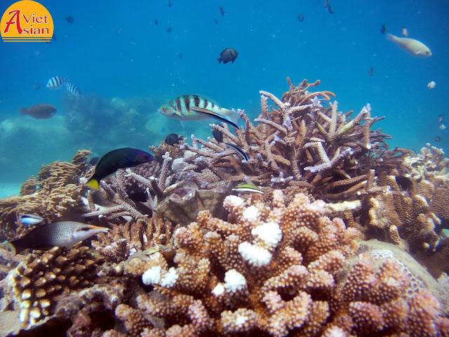 Tour Đi Bộ Dưới Biển 2
