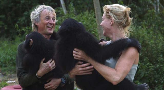 Chimpances y gorilas con Belen Rueda