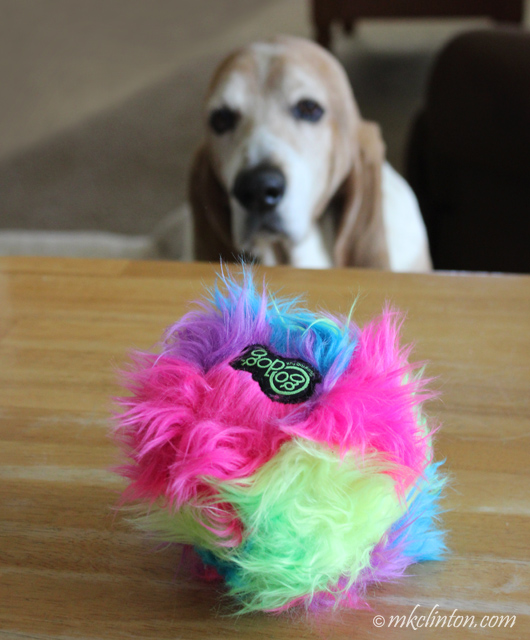 Dog looking at multi-colored Furballz