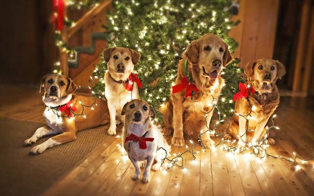 Honden bij de kerstboom