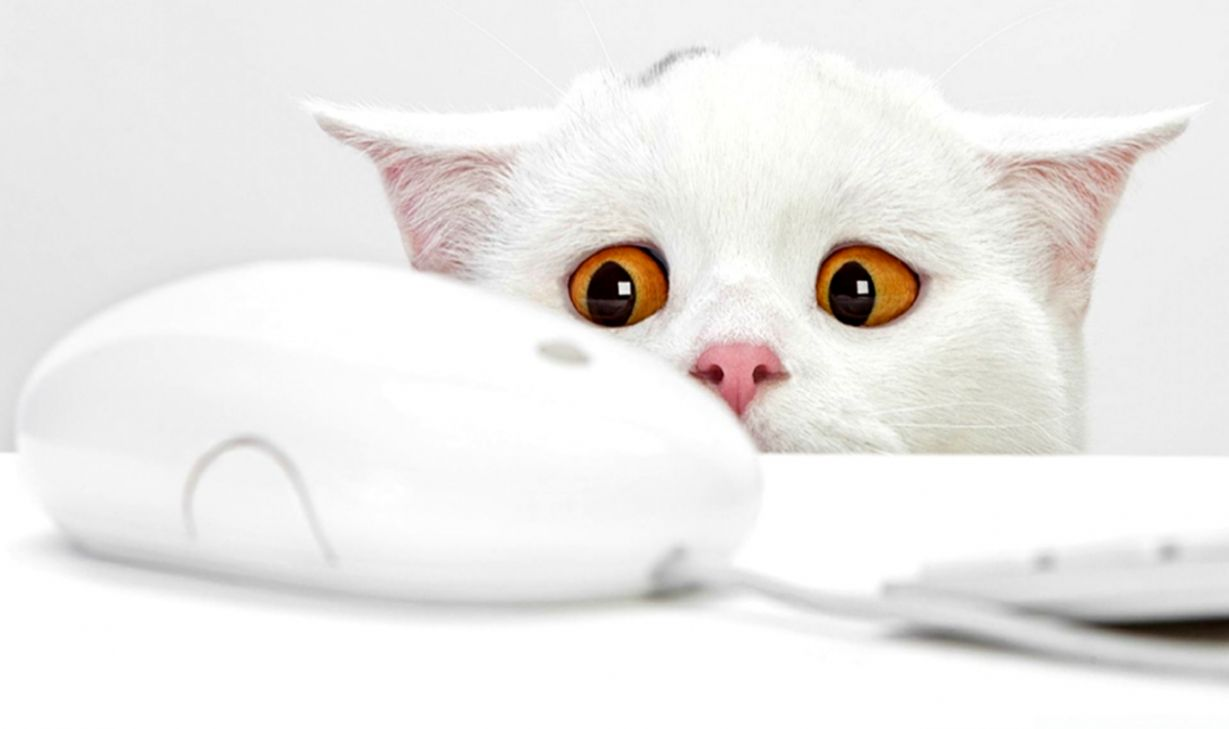 Cute Cat Wallpaper Hd Wallpapers Sinaga