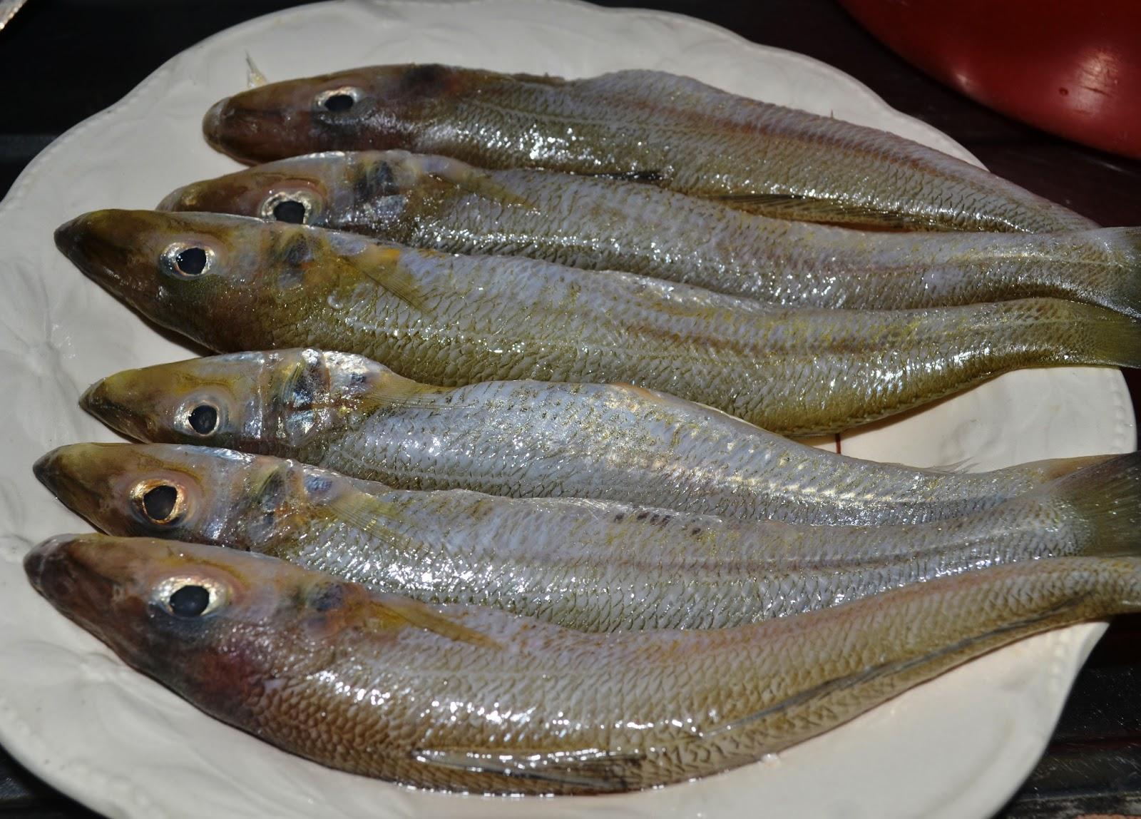 Gümüş Balığı Tava