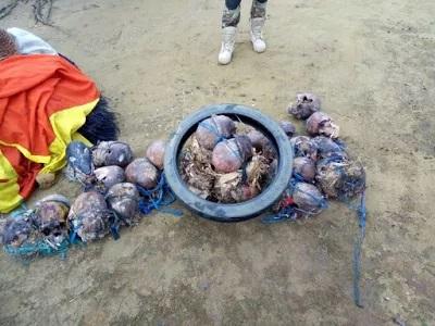 SHOCKER: 23 Human Skulls, Full Skelleton DISCOVERED In Cross River Militants Shrine; See Photos