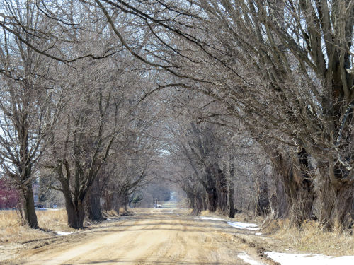 Conrad Road tunnel of trees near Scottville Michigan