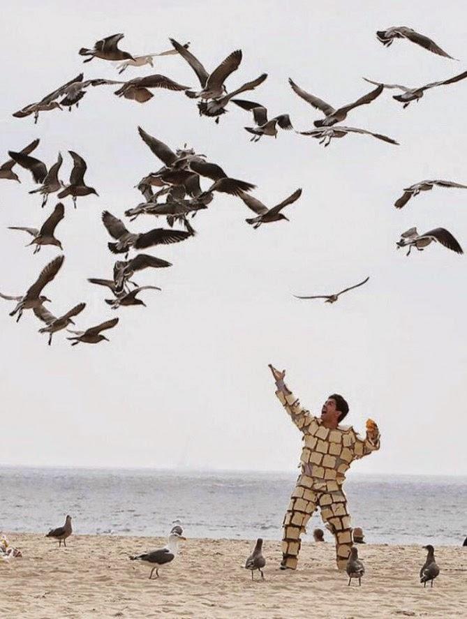 Gaviotas alimentandose en la playa