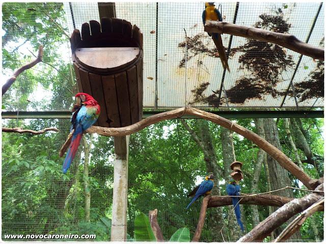 Parque das Aves, Foz do Iguaçu, por novocaroneiro.com