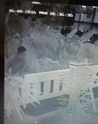 Aksi Pencuri Ayam Ini Tertangkap Kamera CCTV