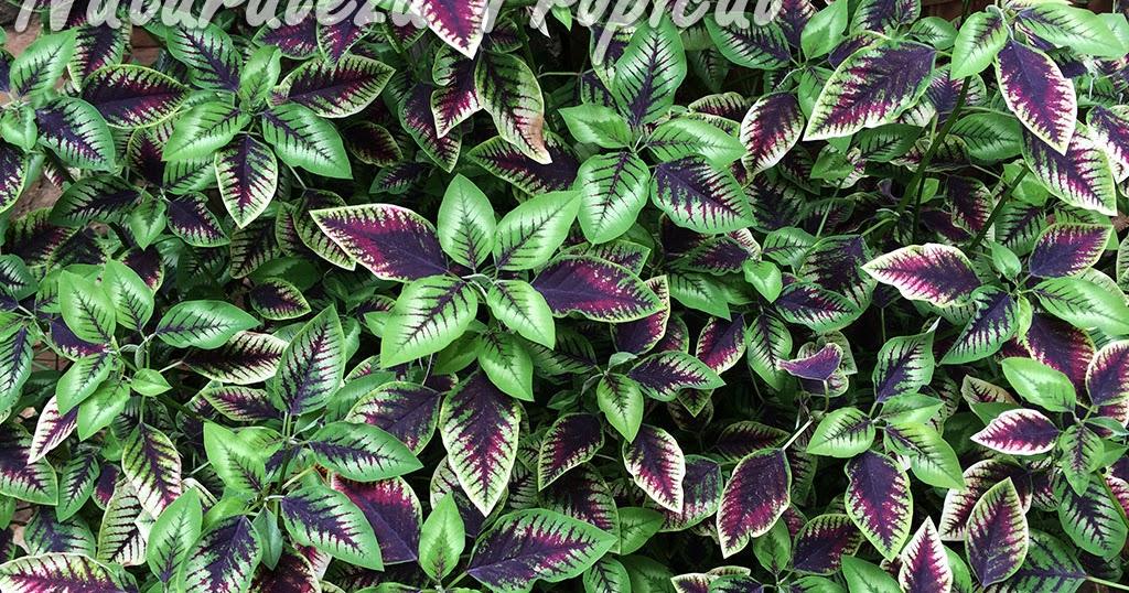 Naturaleza tropical una planta ideal para adornar tu for Una planta ornamental