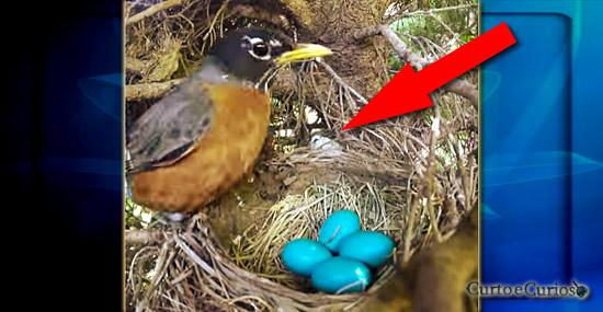 O bizarro final de um time-lapse em um ninho de passarinhos...