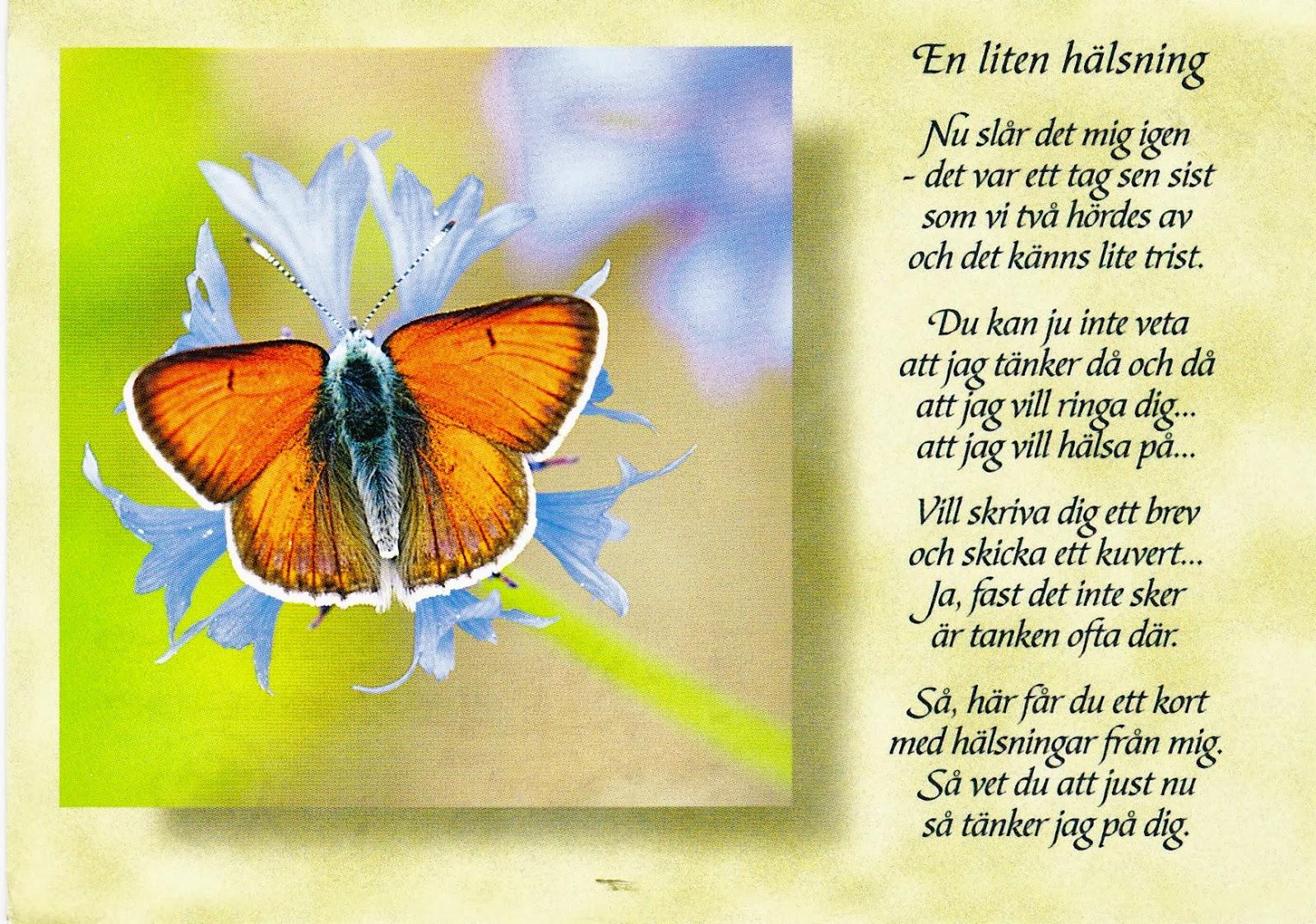 födelsedag hälsning Lilla Solberga: UPPSKATTADE HÄLSNINGAR födelsedag hälsning