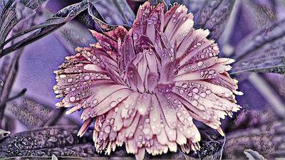 Style Transfer- Purple Pond