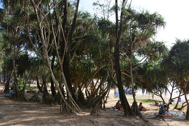 Kata Beach Phuket trees