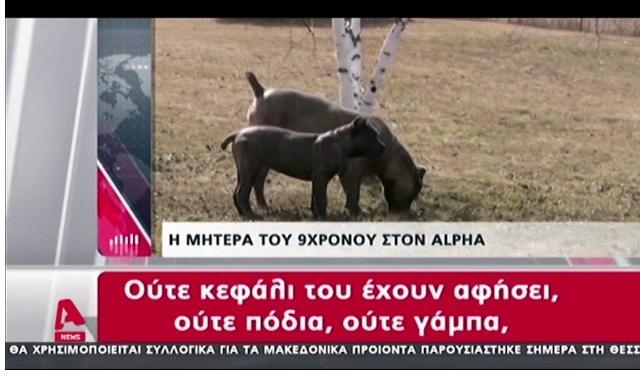 Σέρρες: Τι δηλώνει η μητέρα του παιδιού - «Το παιδί είναι πετσοκομμένο από τα σκυλιά» (βίντεο)