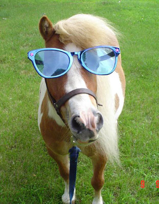 Funny Animals: Funny Horse Pictures