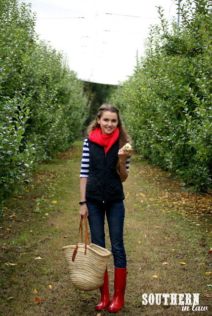 Apple Picking in Bilpin NSW - Pick Your Own Fruit Orchard, Bilpin Springs