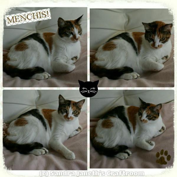 Menchis, Gatos