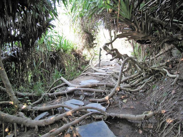 pathway cannon fort cat ba halong bay vietnam