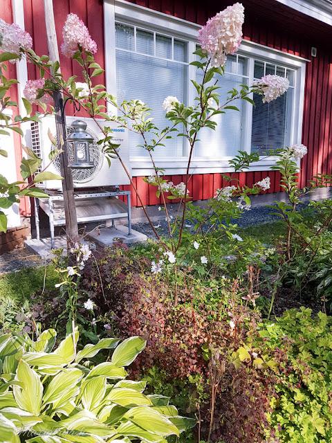 perennapenkki talo koti puutalo piha kukkamaa hortensia