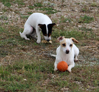 Louise with bone, Thelma with ball