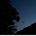 Ministério Público e Força Policial executam megaoperação com apoio aéreo em Cornélio Procópio
