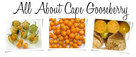 The Earth of India: All About Cape Gooseberry