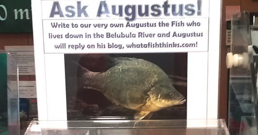What a Lot of Questions for a Fish!