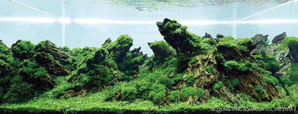 một bố cục thủy sinh dùng đá tiger tuyệt đẹp