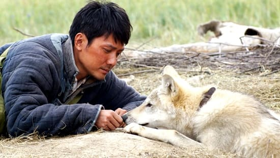 Chen and wolf - Wolf Totem 2014