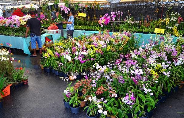 Orkid Royal Floria