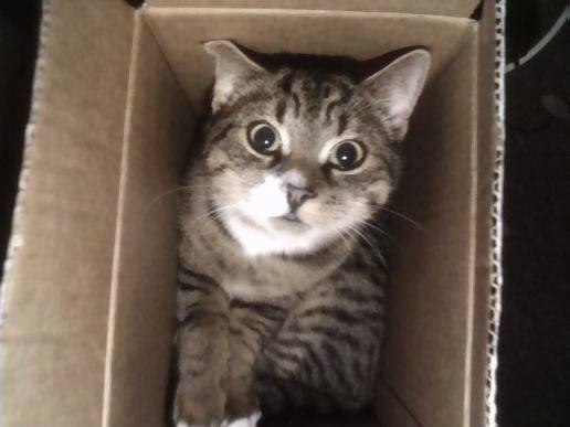 Cats humor #7