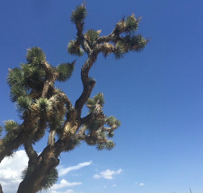 Tamera Beardsley: Palm Springs And Finding New 4th Of July