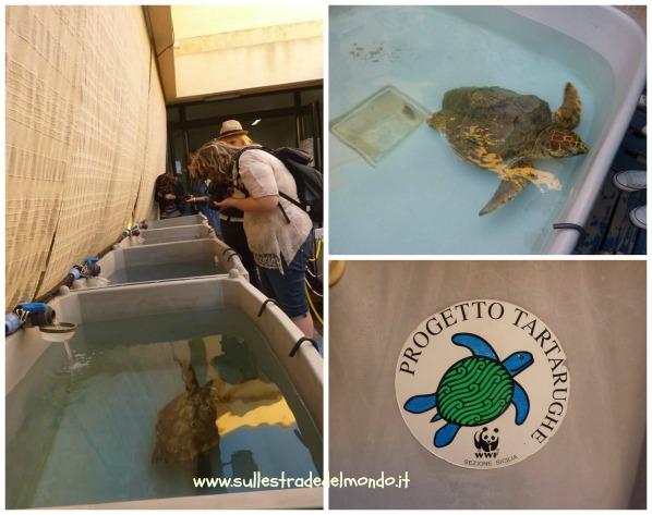 Progetto tartarughe marine wwf