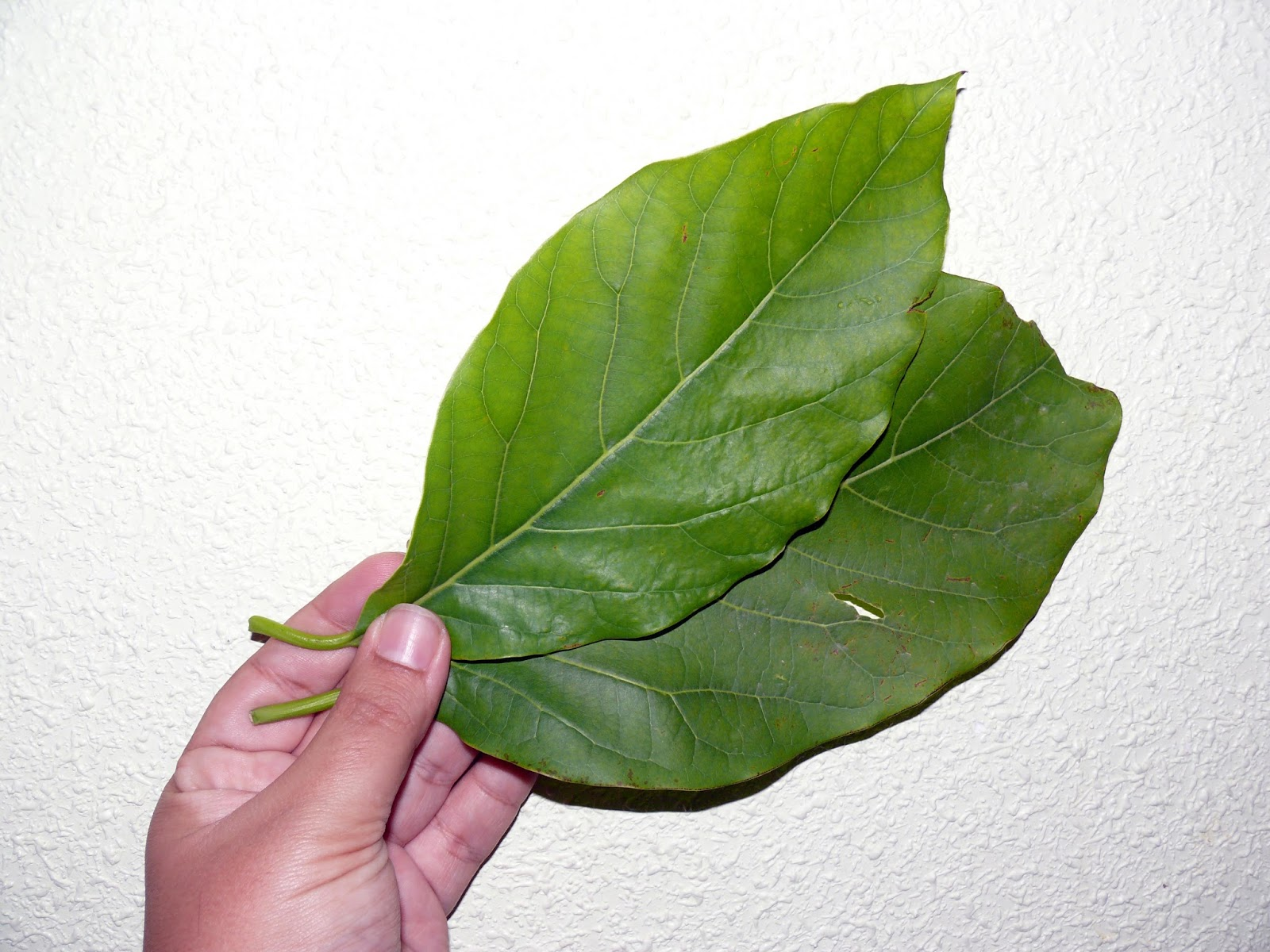 Agua de hojas de almendro para adelgazar