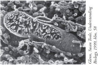Mitokondria sel