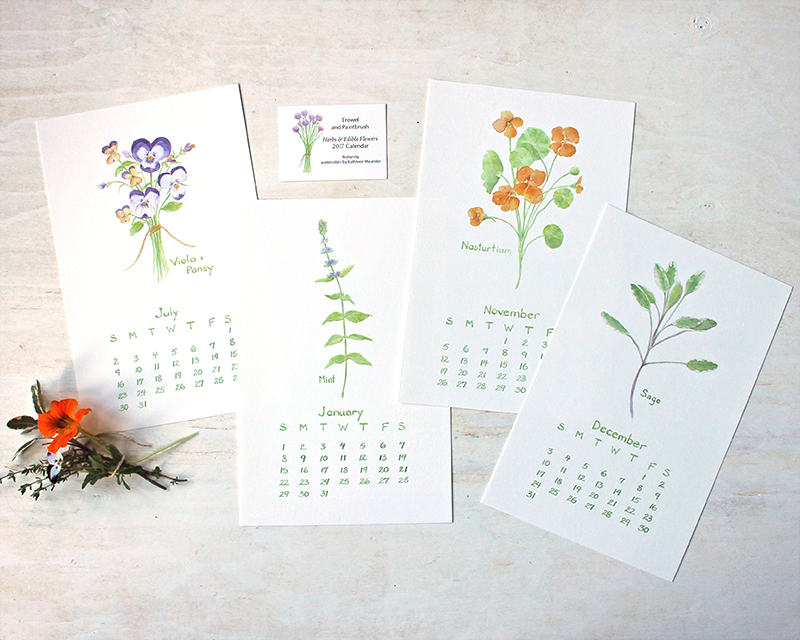 Calendar with watercolor images of herbs and edible flowers by Kathleen Maunder (trowelandpaintbrush.com)