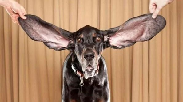 Top Ten Amazing Animal Records