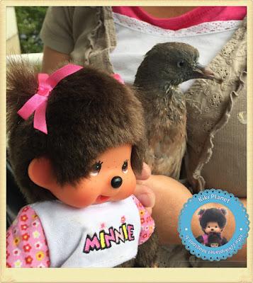 Diana la Monchhichi et Colombine le bébé pigeon pigeonneau oisillon